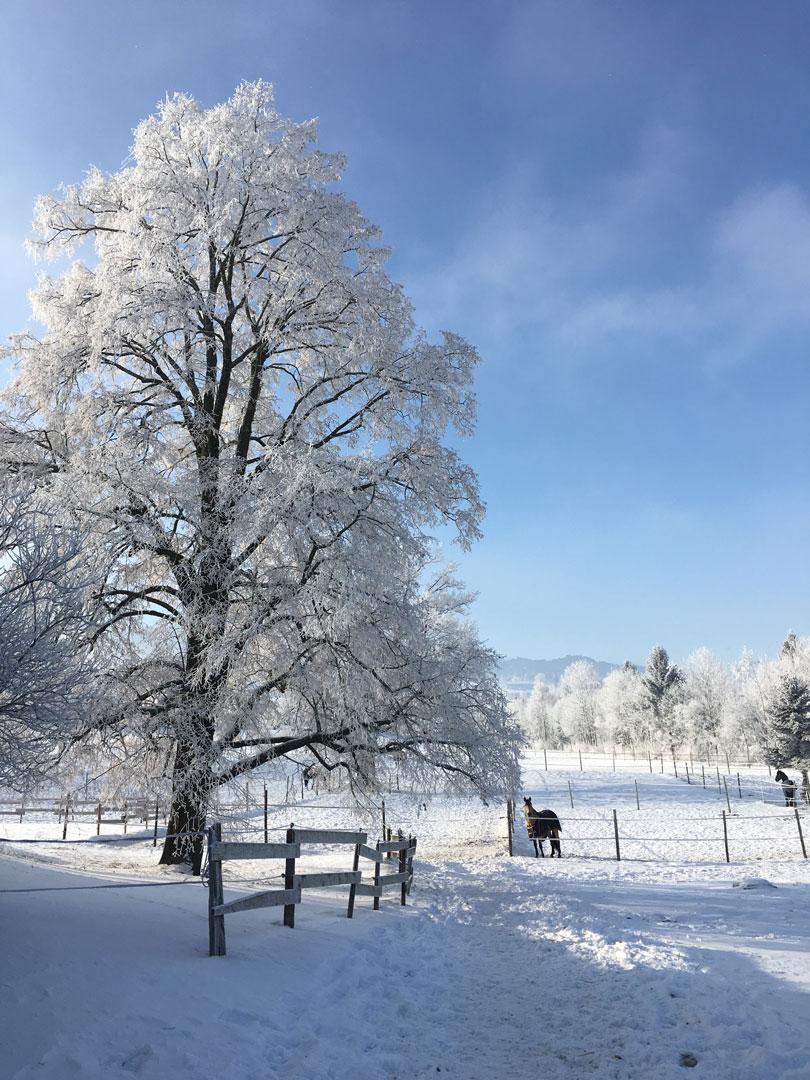 Camps d'équitation Noël et Nouvel An !