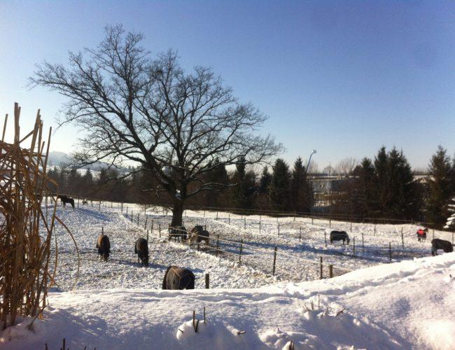 La ferme – Les Kà