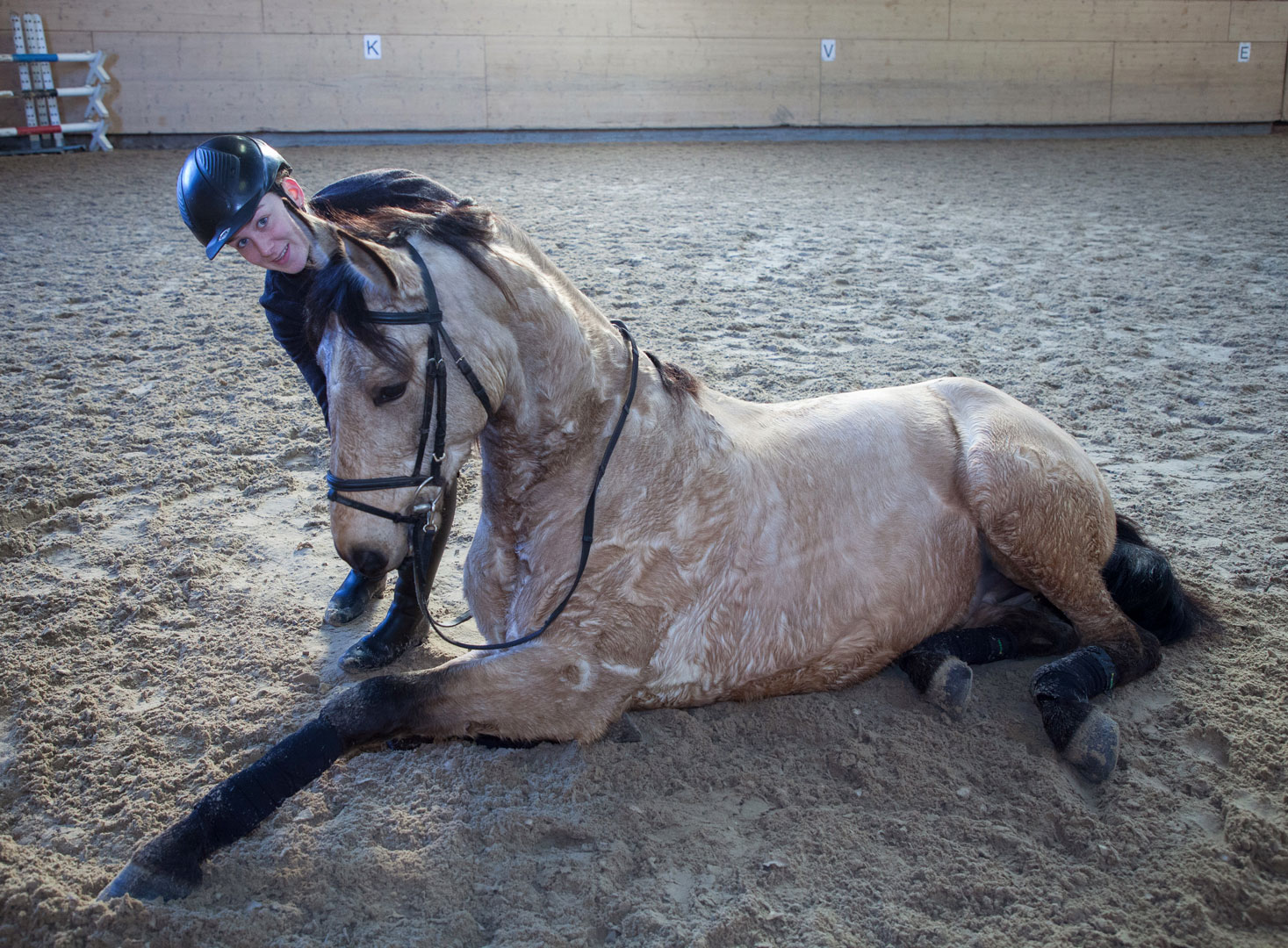 chevaux à vendre, centre équestre les kà, ferme équestre, école d'équitation - hongre pure race espagnole - cartage